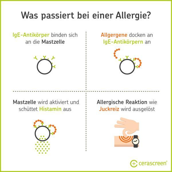 Был ли passiert bei einer Allergie im Körper?