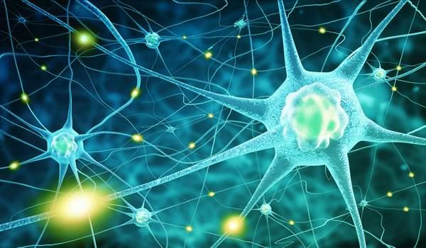 Nervenzellen - Витамин B12 schützt Nerven